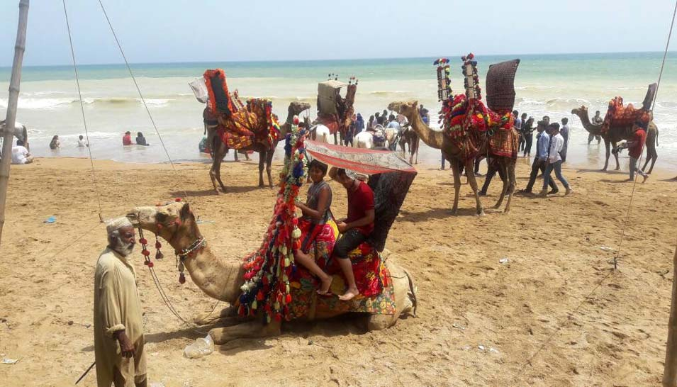 turtle beach camel ride